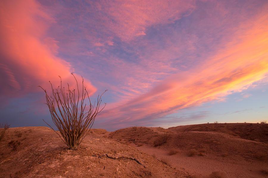 Ocotillo Skies Photograph