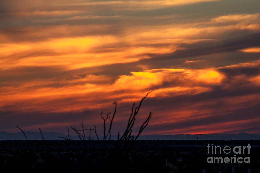 Sunrise Photograph - Ocotillo Sunset by Robert Bales