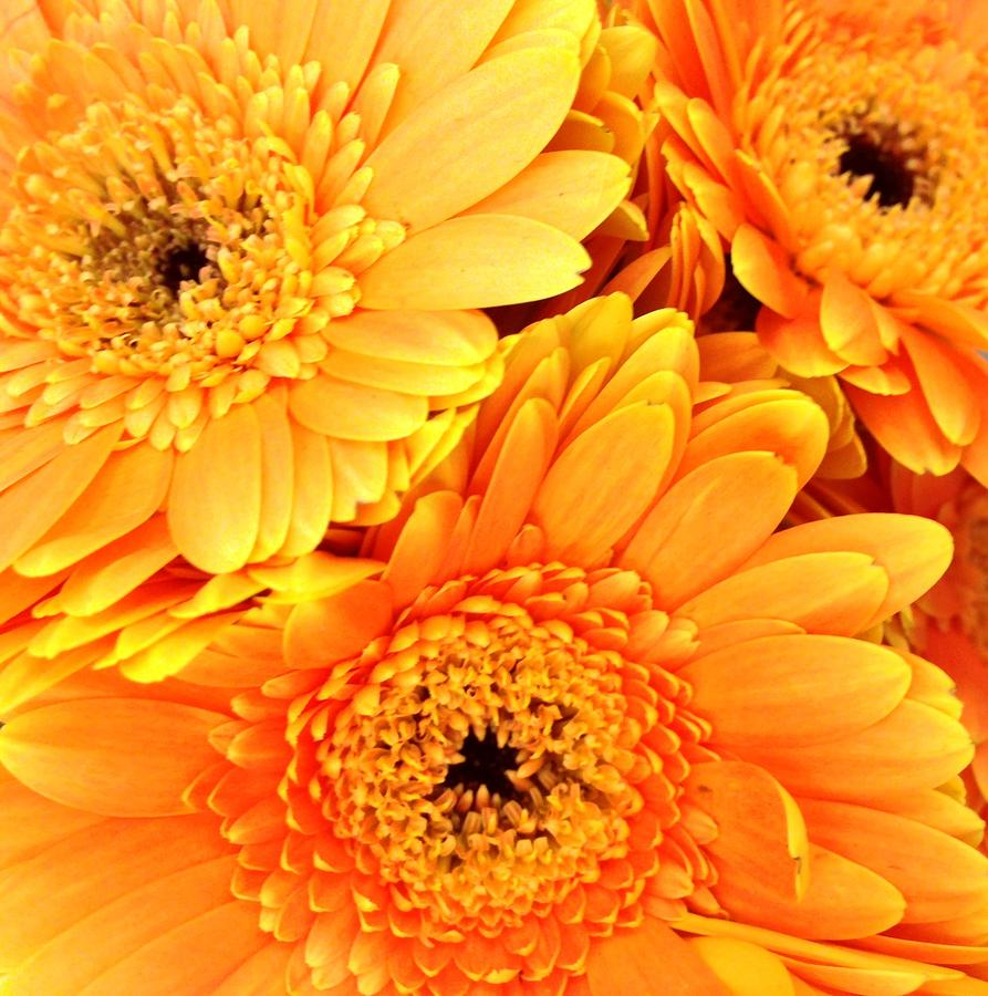 Flowers Photograph - October by Caroline Lomeli