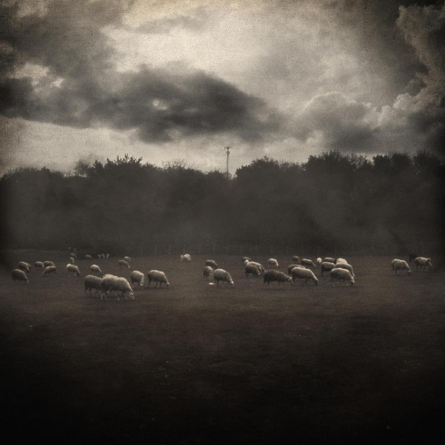 Field Photograph - October Insight by Taylan Apukovska
