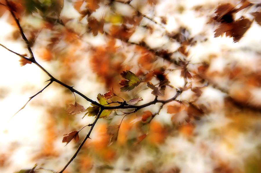 Autumn Photograph - October by Reka Lendvai