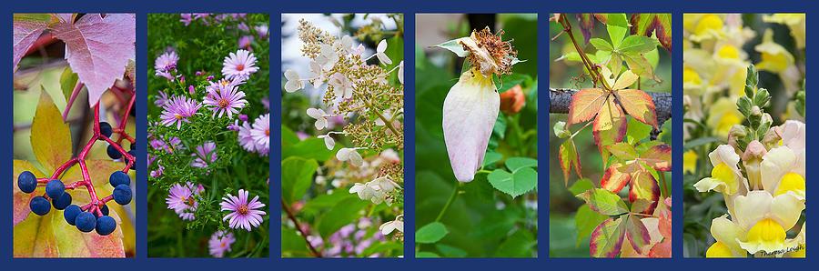 Garden Photograph - October by Theresa Tahara