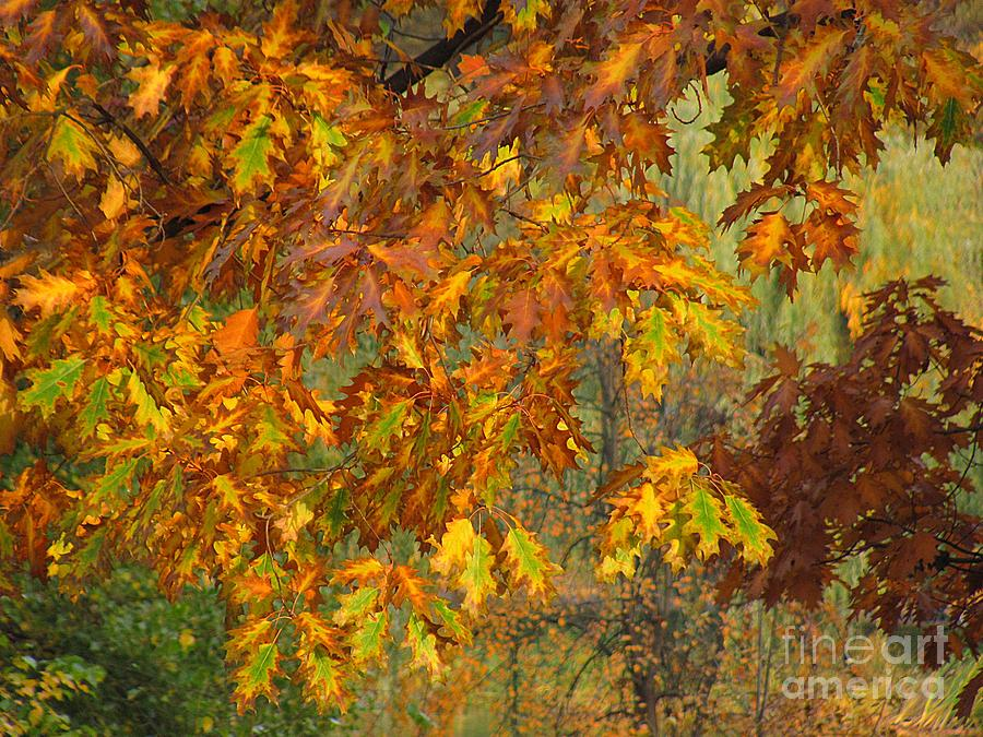 Autumn Photograph - October Watercolors_1 by Halyna  Yarova
