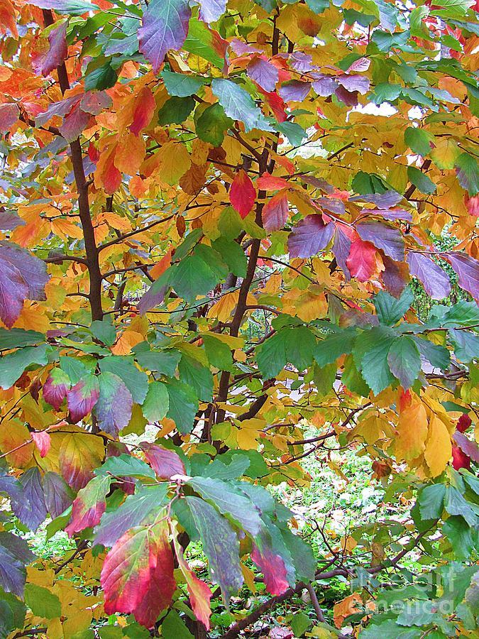 Autumn Photograph - October Watercolors_4 by Halyna  Yarova