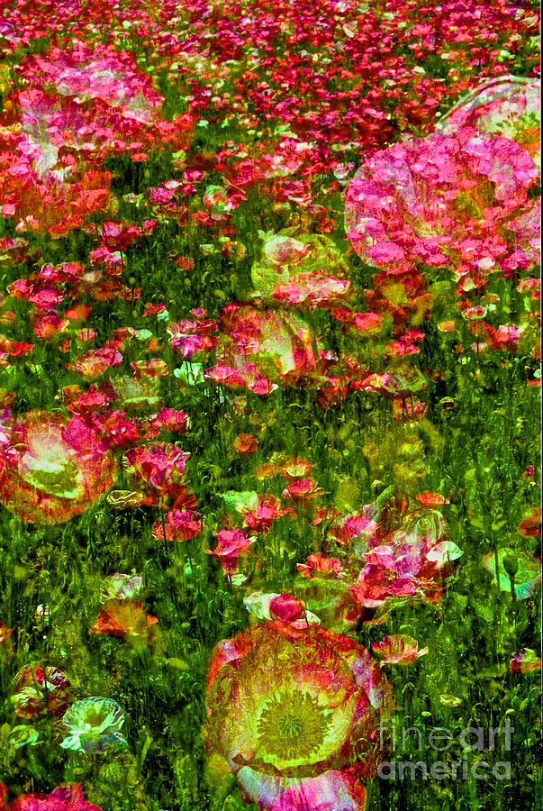 Ode To Monet Photograph