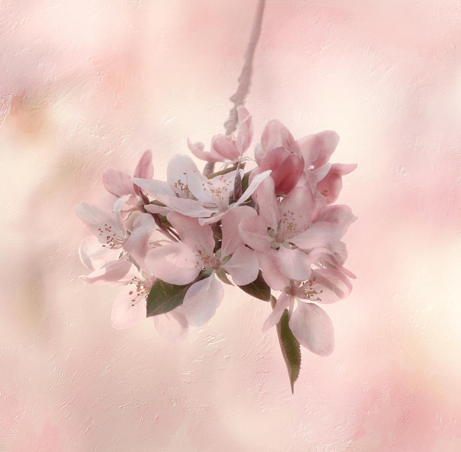 Flower Photograph - Ode To Spring by Kim Hojnacki