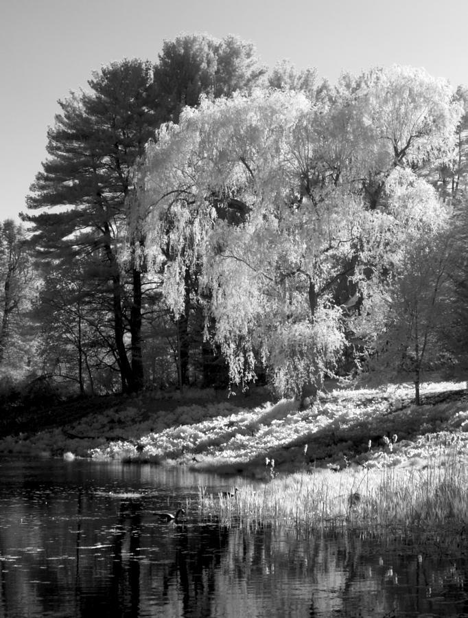 Tree Photograph - Off The Beaten Path by Luke Moore
