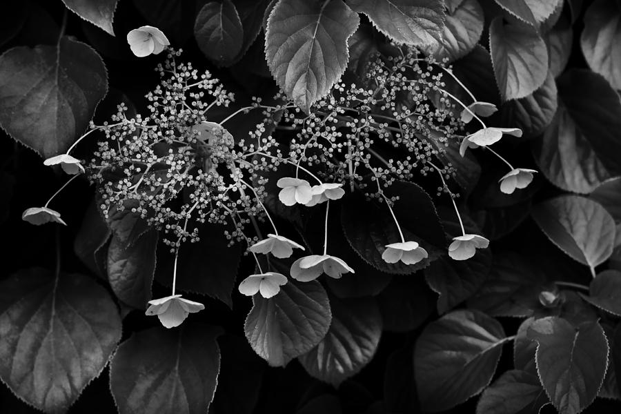 Flora Photograph - Off The Wall by Don Powers