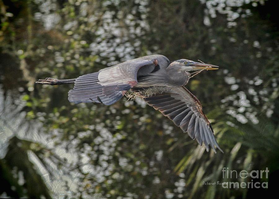 Heron Photograph - Off To The Nest 2012 by Deborah Benoit