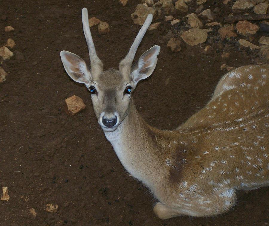 Deer Photograph - Oh Deer by Noreen HaCohen