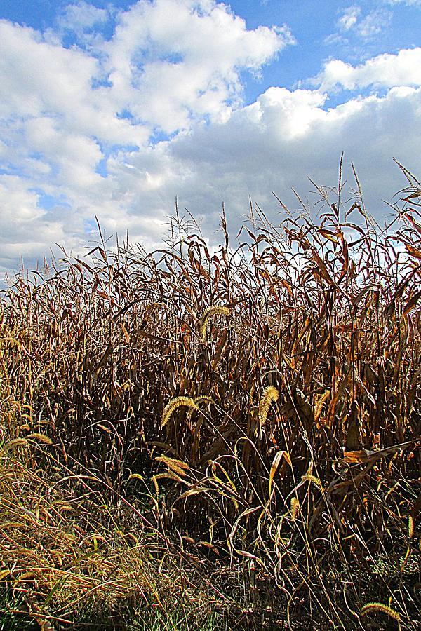 Corn Field Photograph - Ohio Corn by Andrea Dale