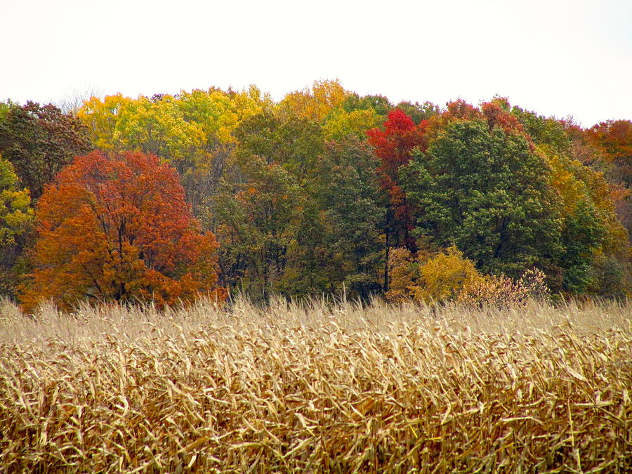 November Photograph - Ohio In November by Andrea Dale
