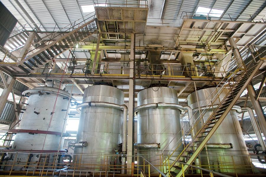 Agriculture Photograph - Oil Palm Processing Factory by Scubazoo/science Photo Library