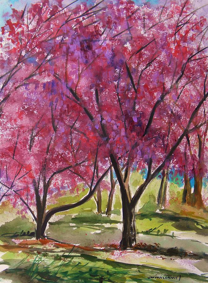 Cherry Tree Painting - Okame Cherries by John Williams