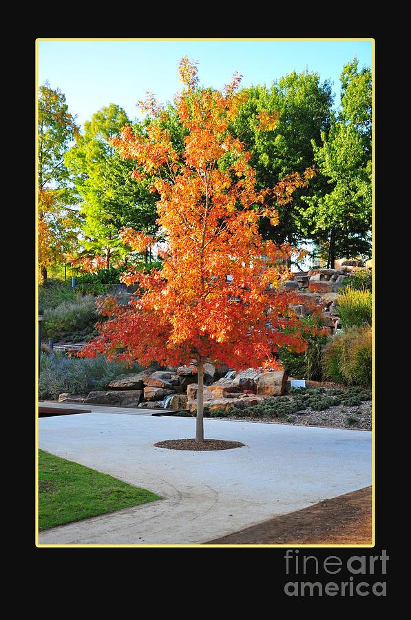 Fall Photograph - Oklahoma Fall by Randi Grace Nilsberg