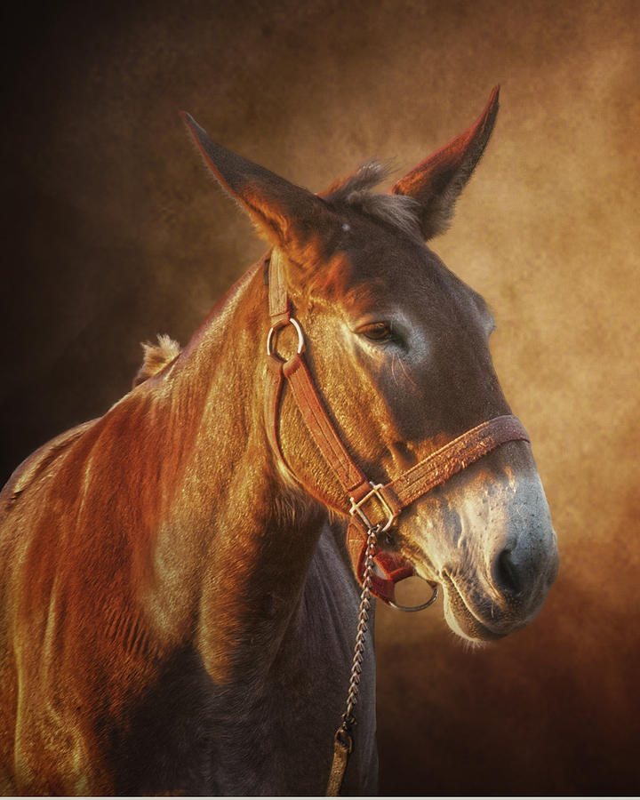 Portrait Photograph - Ol Red by Ron  McGinnis
