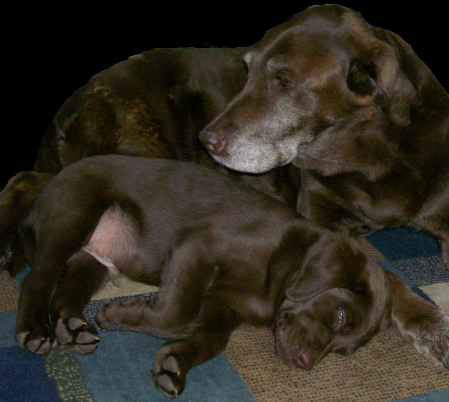Dogs Photograph - Old And Young by Barbara S Nickerson