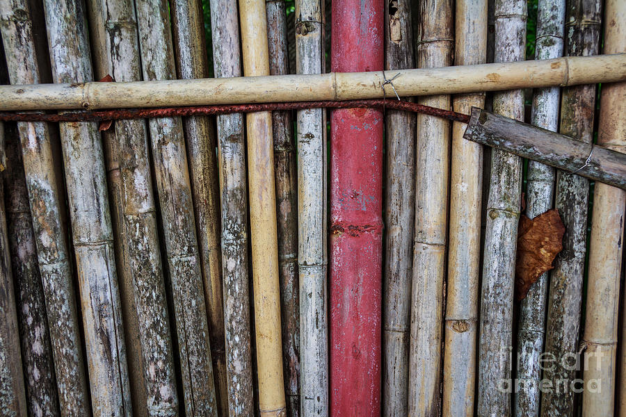 Brown Photograph - Old Bamboo Fence by Niphon Chanthana