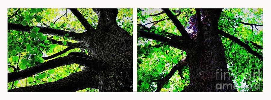 Barbara Griffin Photograph - Old Barks Diptych - Deciduous Trees by Barbara Griffin