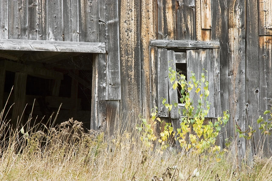 Old Barn In Fall Maine Photograph by Keith Webber Jr