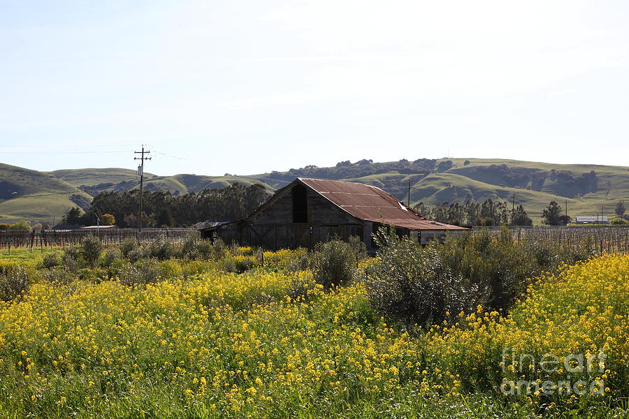 Wingsdomain Photograph - Old Barn In Sonoma California 5d22234 by Wingsdomain Art and Photography