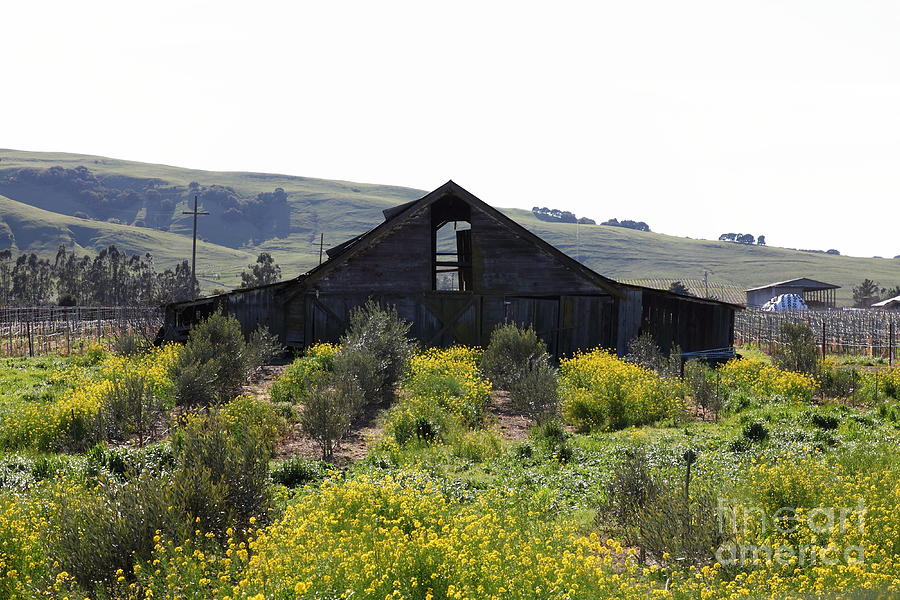 Sonoma Photograph - Old Barn In Sonoma California 5d22235 by Wingsdomain Art and Photography