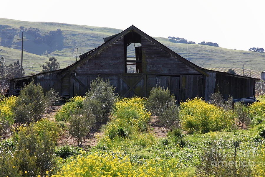 Sonoma Photograph - Old Barn In Sonoma California 5d22236 by Wingsdomain Art and Photography