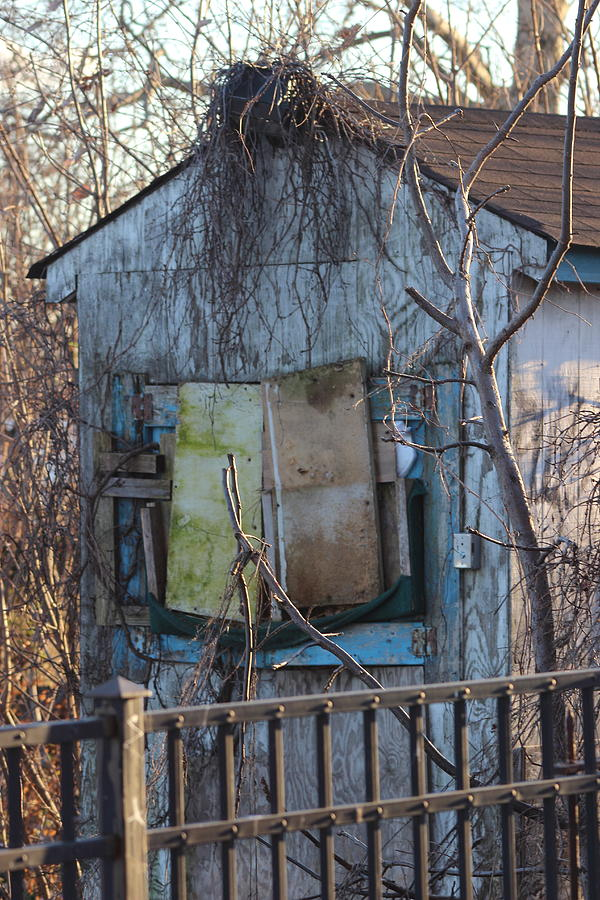 Building Photograph - Old Blue Shack by Tom Gari Gallery-Three-Photography