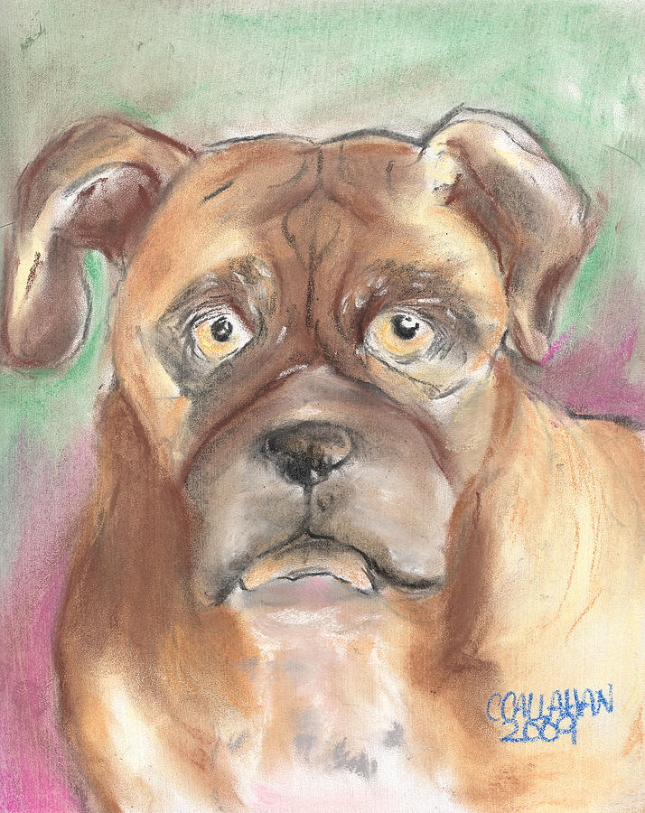 Animals Pastel - Old Boxer by Christine Callahan