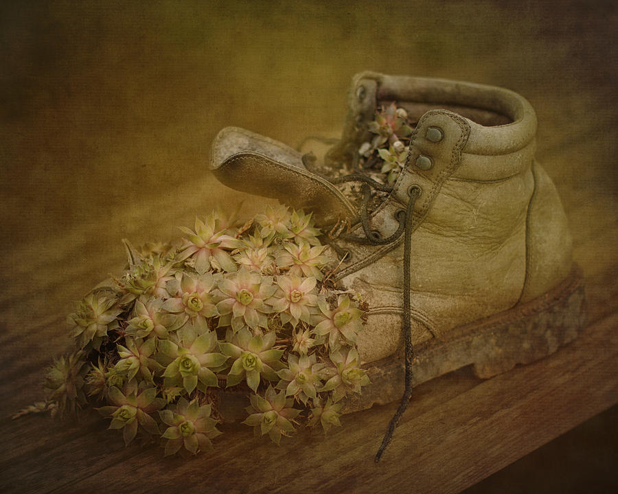 Old Photograph - Old Brown Shoe by Bob Stevens