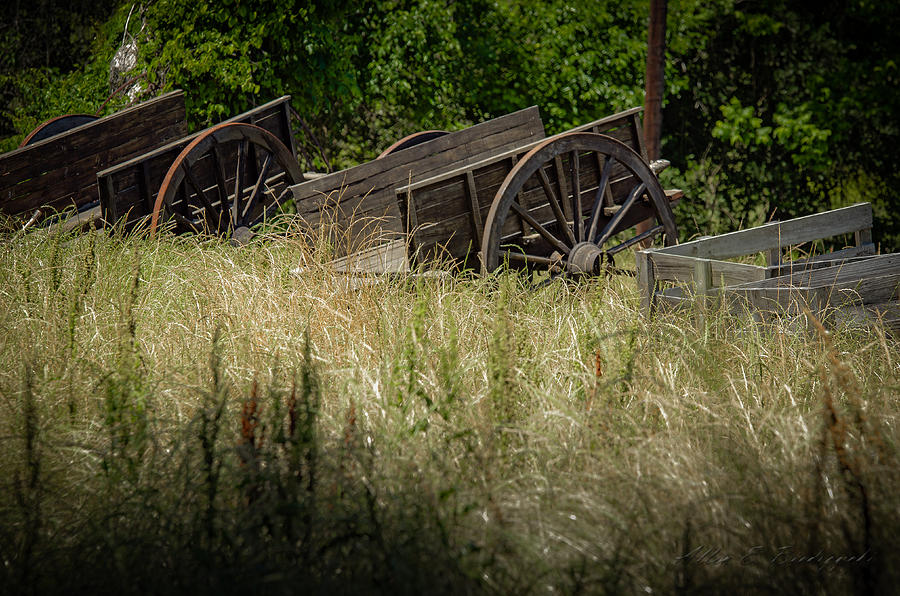 Old Wagons Photograph - Old Cotton Bale Wagons by Allen Biedrzycki