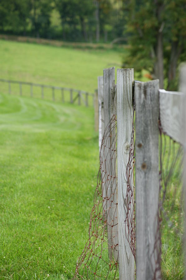 Wood Photograph - Old Fence by Heidi Poulin