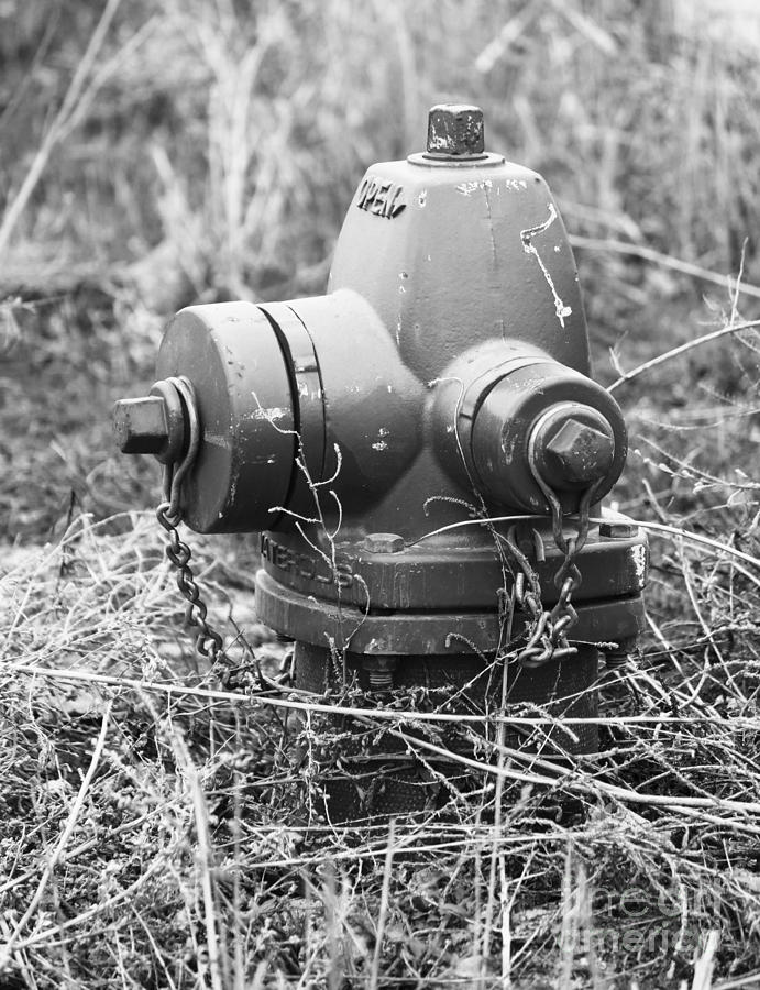 Fire Hydrant Photograph - Old Fire Hydrant by Jackie Farnsworth