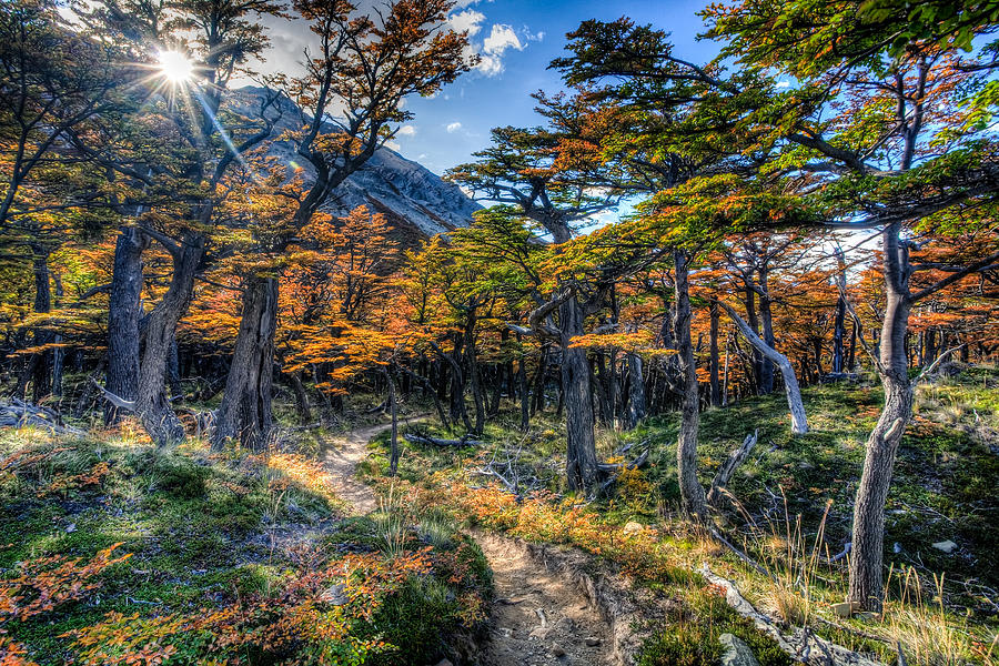 Argentina Photograph - Old Forest by Roman St
