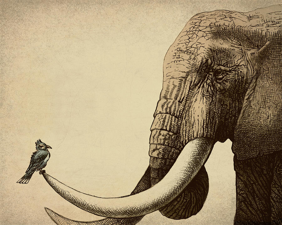 Elephant Photograph - Old Friend by Eric Fan