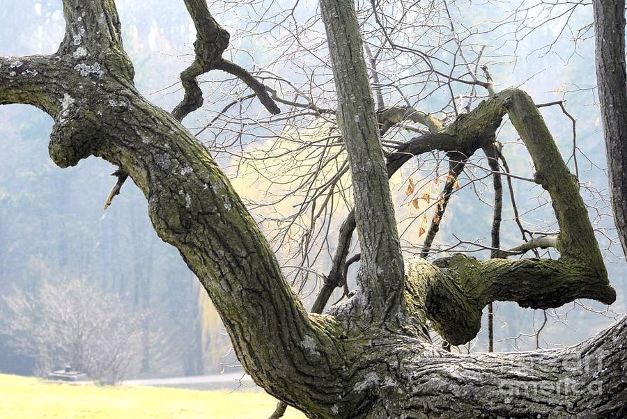 Old Tree Digital Art - Old Friends 3 by Leo Symon