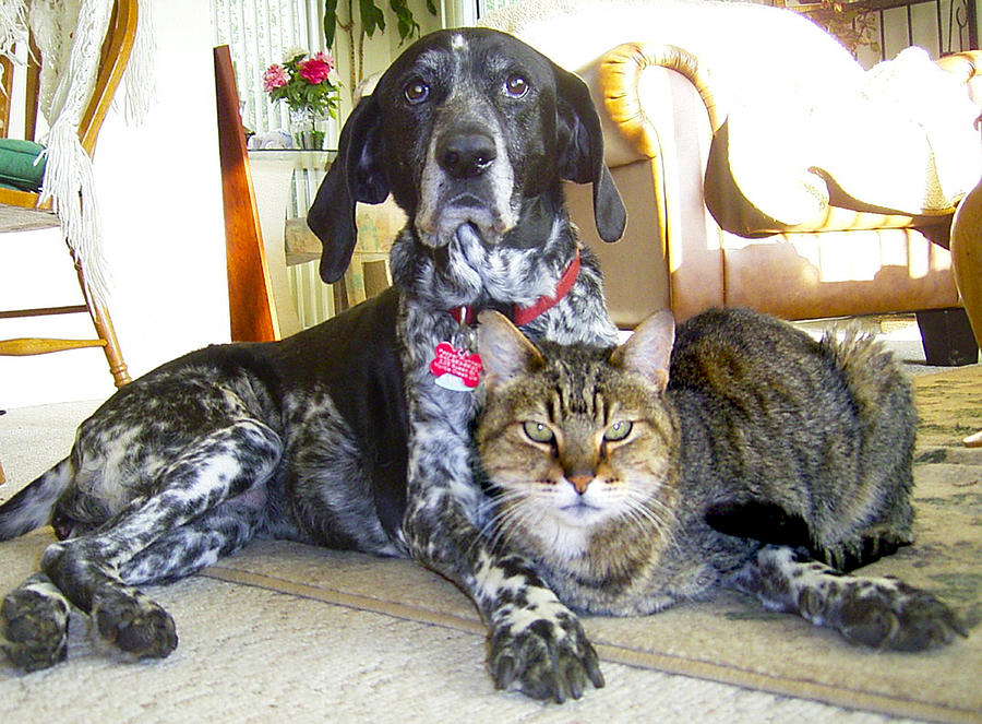 Old Friends Cat N Dog Photograph