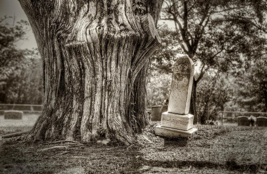 Cedar Photograph - Old Friends by Scott Norris