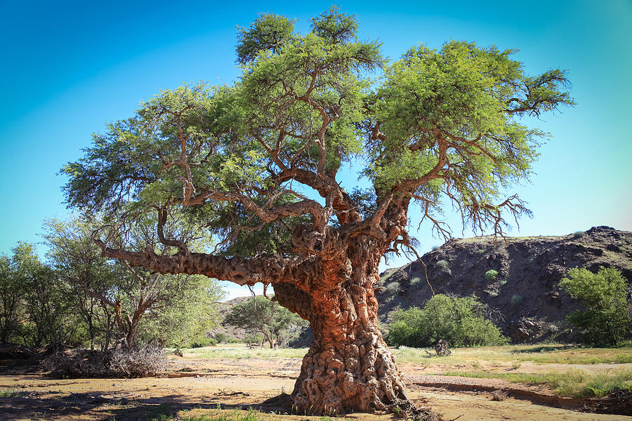Old Gnarled Tree Photograph by Gregory Daley  MPSA