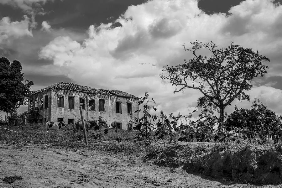 Old Photograph - Old House And Cows - Bw by Fabio Giannini
