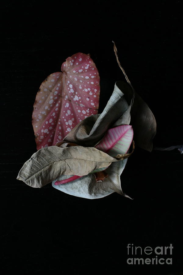 Black Background Photograph - Old Leaves. by Tanya Polevaya