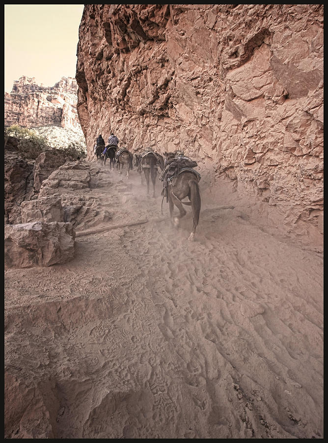 Mules Photograph - Old Mule Train by Stellina Giannitsi