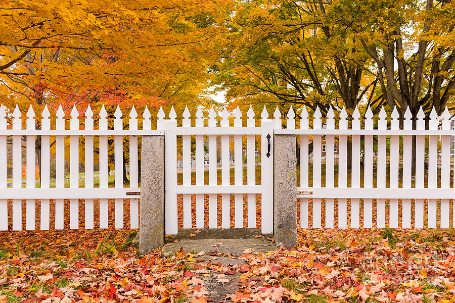 Old New England White Picket Fence by Edward Fielding