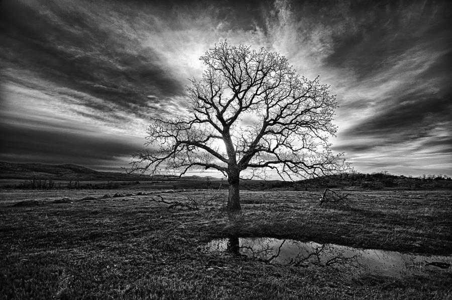 Oak Tree Photograph - Old Oak by Aaron Thompson