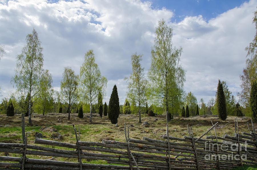 Birches Photograph - Old Pastureland by Kennerth and Birgitta Kullman