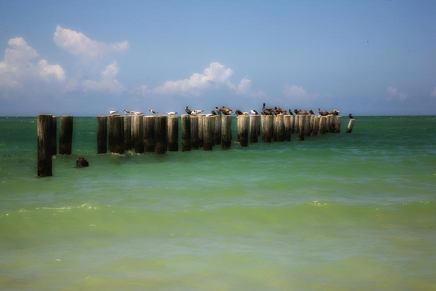 Old Pier  Naples Bay by Carol Kinkead