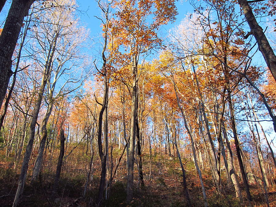 Old Photograph - Old Rag Hiking Trail - 121258 by DC Photographer