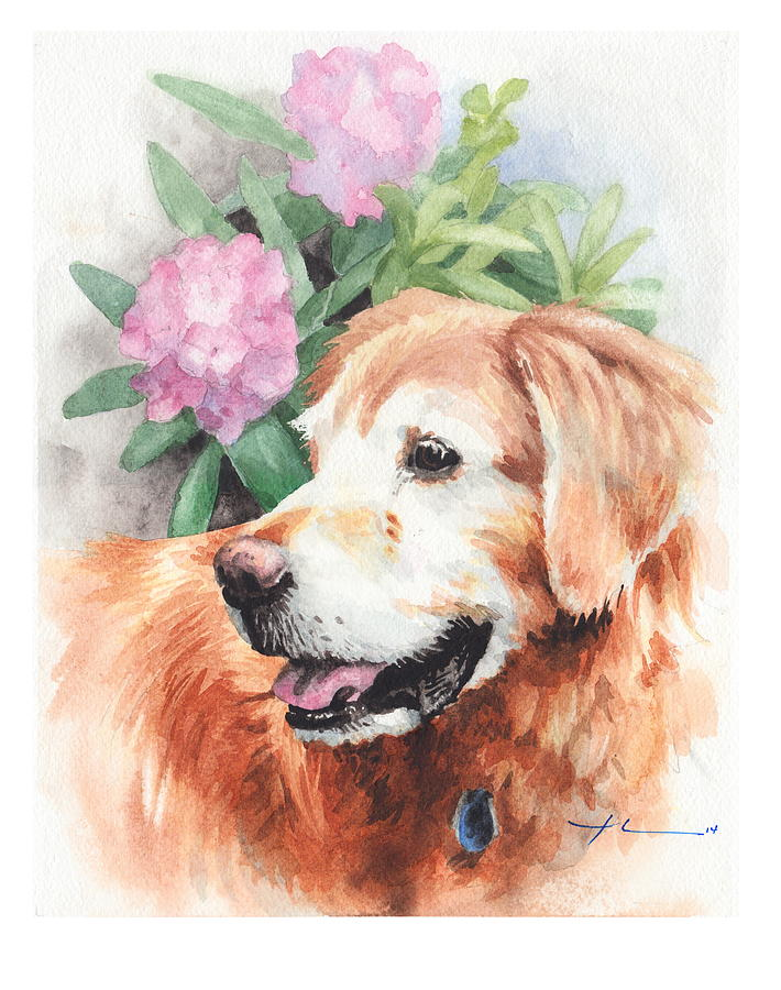 Old Retriever Dog Watercolor Portrait Drawing by Mike Theuer