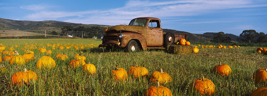 Color Image Photograph - Old Rusty Truck In Pumpkin Patch, Half by Panoramic Images