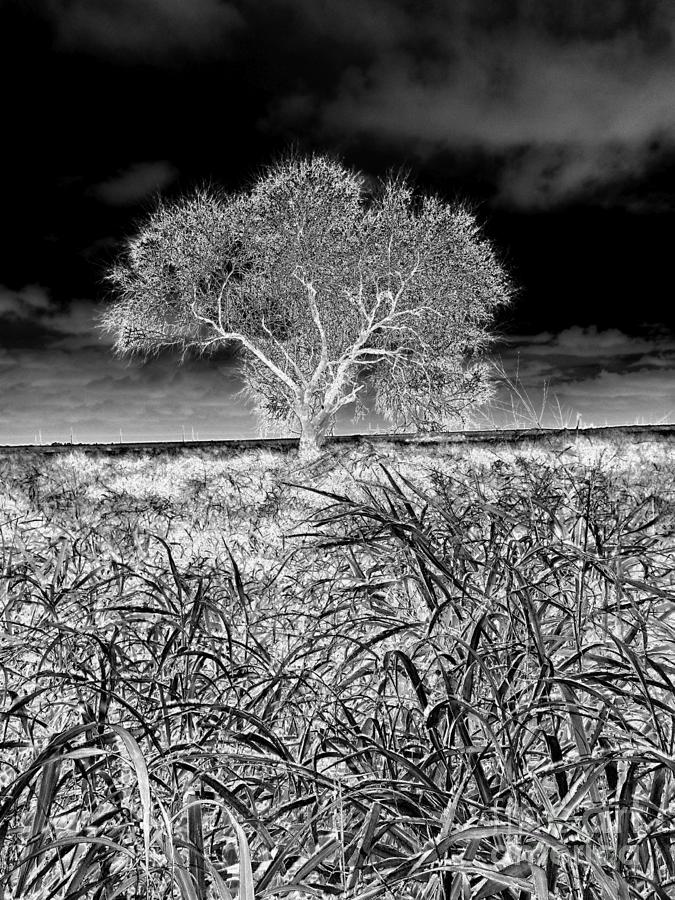 Black And White Photograph - Old Texas Fields by Alexander Van Berg